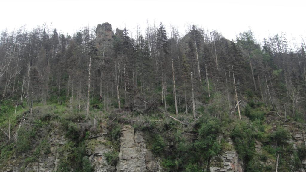 акари караки птицы дикуши эвенки лес